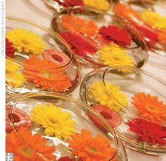 love gerber daisies