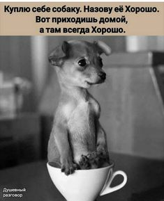 Very interesting post: TOP 40 Funny Dogs and Puppies Pictures.сom lot of interesting things on Funny Dog. Funny Dog Memes, Funny Dogs, Funny Animals, Cute Animals, Cute Puppies, Dogs And Puppies, Funny Puppy Pictures, Cute Dogs Breeds, Dog Breeds