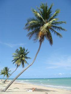 Beach Sao Miguel dos Milagres, Alagoas - Brazil