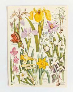 Vintage Flower pictures Botanical Pictures Set of vintage