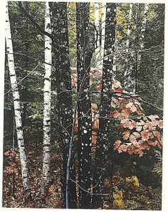 Maple and Birch Trunks and Oak Leaves, Passaconaway Road, New Hampshire, Eliot Porter, 1956. The Metropolitan Museum of Art, New York. Gift of the artist, in honor of David Hunter McAlpin. © 1990 Amon Carter Museum, Fort Worth, Texas