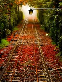 The train track to the mystery world. With vibrant red leaves on the train track and with an old fashion night lamp in the centre of the photo. The fog at the back of the train tracks give a mystery feeling to it. Beautiful World, Beautiful Places, Amazing Places, Beautiful Scenery, Train Tracks, Belle Photo, Pretty Pictures, Amazing Pictures, Railroad Tracks