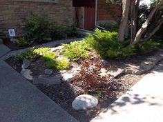 (BACKYARD) Small front yard landscaping made simple. This attractive exposed aggregate driveway with a simple rock garden will require almost no maintenance. A small dry creek bed has been added for drainage from the side of the house.
