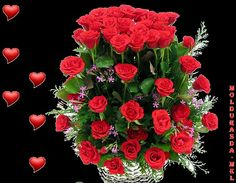 rosas e coração