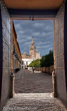 La Giralda, campanario de la Catedral de Sevilla .Vista dese El Patio de Banderas a la salida del Alcázar de Sevilla por la llamada Puerta de Carruajes