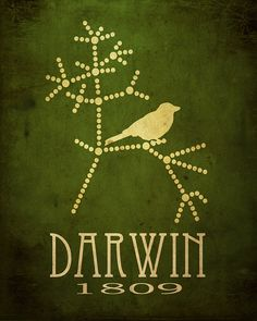 Darwin's sketch. Make the lines tree branches and perch the bird (obviously one of Darwin's finches) amongst the twigs. maybe a different finch on a different twig