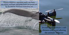 whaledrones