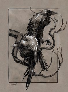 Huginn and Muninn were the symbolism of Odin's mind and thought. The Vikings respected Viking ravens because of this Raven And Wolf, Raven Bird, Viking Raven, Viking Art, Crows Drawing, Painting & Drawing, Crow Painting, Crow Art, Bird Art