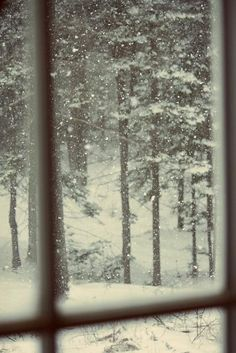 View of snowy woods from a warm window