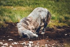 """""""Bosnia's untamed heart"""" Wildpferde in Bosnien – Fotoserie Teil #1 – 2016  Niemals zuvor hat es mich so sehr mit Glück erfüllt, einfach nur im Gras zu sitzen u…"""