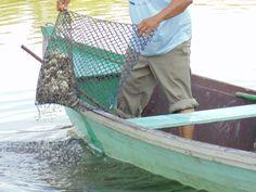 Viveiro de ostras cultivadas em cativeiro na Baia de Guaratuba/PR