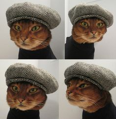 Herringbone Newsboy cap ... for kitties! so cute...
