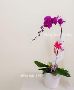 Chậu hoa lan sắc hoa màu nhớ, hoa lan tím thủy chung là món quà không thể thiếu trong những dịp tặng sinh nhật, tặng người yêu, bạn gái trong các ngày lễ 14-2, 8-3, 20-10....kỷ niệm ngày cưới thật ý nghĩa