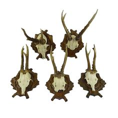 """Set of five European deer antlers displayed on a wood plaques with carved laurel. Ready to hang. Tallest, 7.5""""L x 7""""W x 13.75""""H. Some wear. I…"""