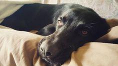 Il travolgente entusiasmo di Snoopy quando piove . . #BauSocial #Milano #cane #dog #puppy #amazing #love #life #instadog #Bau #rain #dogstagram #italia #photooftheday #beautiful #photography #mood #vsco #petsitter #dogsitter #toelettatura #vet #veterinario