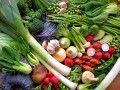 Vegetable Garden Planner - Layout, Design, Plans for Small Home Gardens