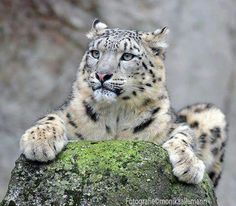Snow Leopard and like OMG! get some yourself some pawtastic adorable cat apparel!