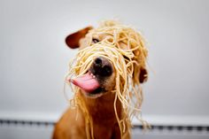 Is This the Real Spaghetti Monster?
