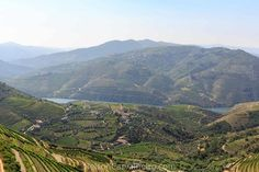 Douro Valley Landscape   Photo by: Nelson Carvalheiro