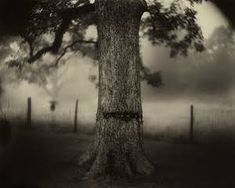 Image result for sally mann a thousand crossings