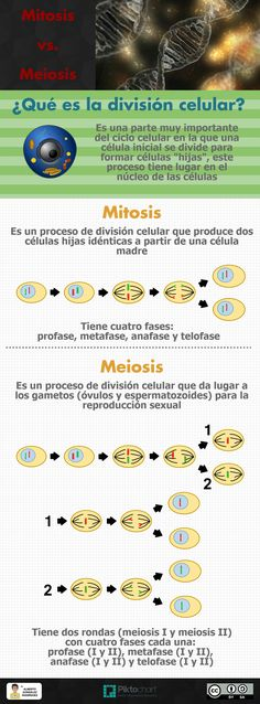 Dna is used as the blueprint for life processes rna is used as a en qu se diferencian la mitosis de la meiosis te lo cuento en la malvernweather Gallery