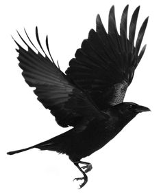 Index of /users/tbalze/bird/Png Crow Art, Raven Art, Corvo Tattoo, Crows Drawing, Rabe Tattoo, Red Right Hand, Fall Clip Art, Paper Mache Sculpture, Crows Ravens