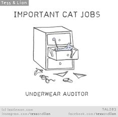 Important Jobs Cats Do Every Day - World's largest collection of cat memes and other animals Funny Animal Memes, Funny Animal Pictures, Cat Memes, Funny Cats, Cats Humor, Funny Horses, Crazy Cat Lady, Crazy Cats, I Love Cats