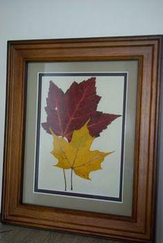 Canoe Corner: Framing Pressed Leaves