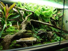 Vivarium with very nice plants!