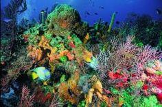 La increíble acuarela de colores bajo el manto del #MarCaribe. El #GranArrecifeMaya es una opción ideal para los amantes del #buceo.
