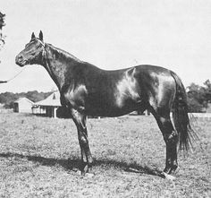 Rock Sand (1900–1914) was a British Thoroughbred race horse and sire. In a career which lasted from the spring of 1902 until October 1904 he ran twenty times and won sixteen races. After being a leading British two-year-old of his generation he became the tenth winner of the Triple Crown in 1903, winning the 2,000 Guineas Stakes the Epsom Derby and the St. Leger Stakes. He won another series of major races as a four-year-old before being retired to stud, where he had success in both Europe…