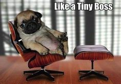 like a tiny boss