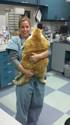 It's a pillow, it's a pet... it's an extremely fat cat!