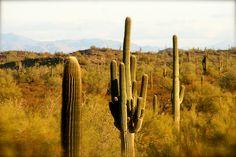 Beautiful Arizona Sonoran Desert.