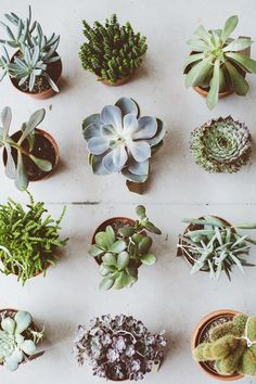 BOTANY/Photography by Kate Berry