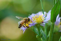 Bee on wildflower, via Flickr.
