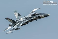 Ambush Predator Hornet                                                                                                                                                                                 Más