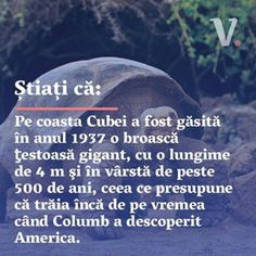 Stiati ca? #voceabiz #stiatica #cuba #animale Tanesha Awasthi, Amazing Facts, Character Design References, Cuba, Did You Know, Affair, Fun Facts, Politics, Names