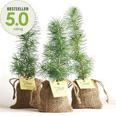 Spread your love for Eastern Leaf!  Pine Tree Plant Favor - Burlap Pouch