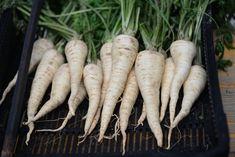 Bohatá úroda kvalitného petržlenu: Takto sa z nej budete tešiť aj vy Carrots, Gardening, Vegetables, Flowers, Outdoor, Food, Balcony, Ideas, Outdoors
