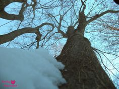 Awesome Perspective Shot of a Tree http://pumpkinemilysmiles.blogspot.com/2014/02/trees-and-snow.html