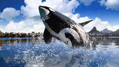 ORCA WALLPAPER - (#66413) - HD Wallpapers - [WallpapersInHQ.com]