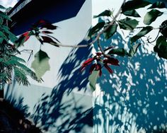Viviane Sassen // Flamboya: Pied Beauty -- GLORY be for dappled things— Landscape plotted and pieced—fold, fallow, and plough; And áll trádes, their gear and tackle and trim. All things counter, original, spare, strange; Whatever is fickle, freckled (who knows how?) With swift, slow; sweet, sour; adazzle, dim; He fathers-forth whose beauty is past change: Gerard Manley Hopkins (1844–89)