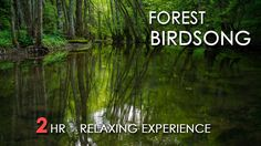 Forest Birdsong - Relaxing Nature Sounds - Birds Chirping - REALTIME - N...