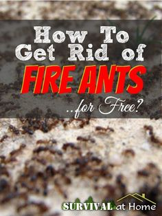How to Get Rid of Fire Ants.for Free! - Survival at Home Fire Ant Bites, Kill Fire Ants, Get Rid Of Ants, Garden Pests, Organic Gardening, Gardening Tips, Pest Control, Hydroponics, Vegetable Garden