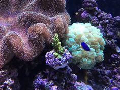 Wunderschöne Unterwasserwelt #coral #reef #reeftank #reefing #aquarium #ilovemyreef