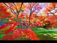 [4K]TOKYO JAPAN 皇居•乾通りの紅葉 The Autumn leaves of the Imperial Palace 東京観光 ...