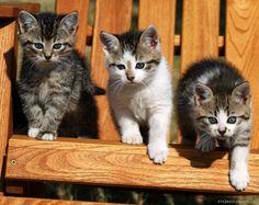 Dzień Kota! Koty wiedzą co dobre :-) https://hastegarden.pl/fotele-ogrodowe.php