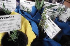Love the herb cards for a fete plant stall. School Fair, School Plan, Pre School, School Kids, Spring Fair, Summer Fair, Herb Labels, Fete Ideas, Country Fair