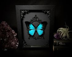 Taxidermy Butterfly real Blue Ulysses in Ornate Gothic Black Shadowbox Witch Halloween Art Chic Halloween Decor, Spooky Decor, Halloween Art, Halloween Horror, Witch Decor, Witch Art, Goth Home Decor, Unique Home Decor, Beauty And The Beast Cake Birthdays